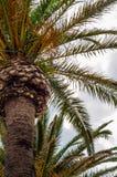 Palmera de extensión hermosa en la playa, símbolo exótico de las plantas Fotografía de archivo