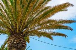 Palmera de extensión hermosa en la playa, símbolo exótico de las plantas Foto de archivo libre de regalías