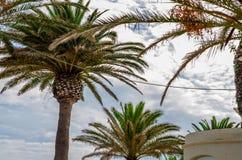 Palmera de extensión hermosa en la playa, símbolo exótico de las plantas Imagen de archivo