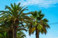 Palmera de extensión hermosa en la playa, símbolo exótico de las plantas Fotos de archivo