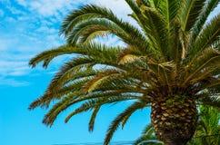 Palmera de extensión hermosa en la playa, símbolo exótico de las plantas Foto de archivo