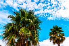 Palmera de extensión hermosa en la playa, símbolo exótico de las plantas Imagen de archivo libre de regalías