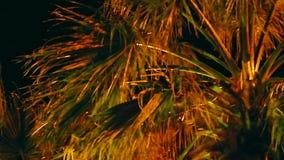 Palmera de la noche almacen de metraje de vídeo
