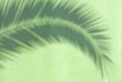 Palmera de la sombra Imagen de archivo