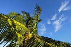 Palmera debajo de las nubes wispy en un cielo azul Fotografía de archivo libre de regalías