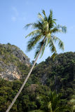 Palmera del coco Imagenes de archivo