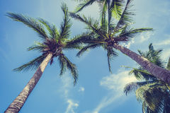 Palmera del coco en el cielo azul Fotos de archivo