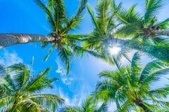 Palmera del coco en el cielo azul Fotos de archivo libres de regalías