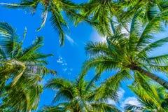 Palmera del coco en el cielo azul Foto de archivo