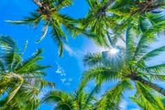 Palmera del coco en el cielo azul Imagen de archivo libre de regalías