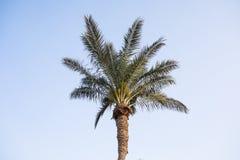 Palmera del coco en el cielo azul Fotografía de archivo libre de regalías