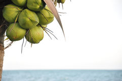 Palmera del coco en la playa Fotografía de archivo