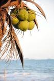 Palmera del coco en la playa Imagen de archivo libre de regalías