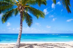 Palmera del coco en la playa arenosa en Hawaii Foto de archivo