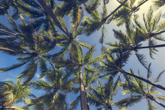 Palmera del coco en la playa arenosa en Kapaa Hawaii, Kauai Fotos de archivo libres de regalías