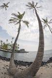 Palmera del coco en la playa blanca tropical de la arena Fotos de archivo