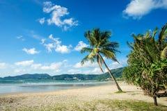 Palmera del coco en la playa con el sol Playa de Patong, isla de Phuket, Tailandia Imagen de archivo libre de regalías
