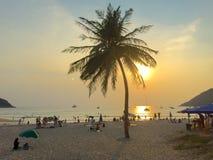 Palmera del coco en la playa en puesta del sol Imágenes de archivo libres de regalías