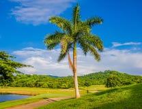 Palmera en campo de golf fotografía de archivo libre de regalías