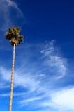 Palmera en el cielo Imagen de archivo libre de regalías