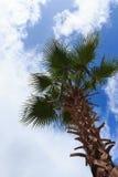 Palmera en el cielo azul Fotografía de archivo libre de regalías