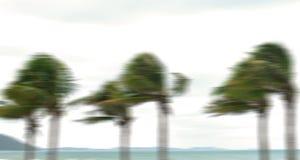 Palmera en el huracán imagenes de archivo