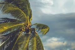 Palmera en el viento con la nube oscura foto de archivo