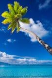 Palmera en la isla de Moorea que cuelga sobre laguna Imagenes de archivo