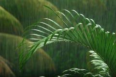 Palmera en la lluvia Imagen de archivo libre de regalías