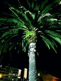 Palmera en la noche Imagen de archivo