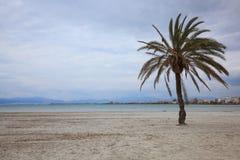 Palmera en la playa Fotos de archivo libres de regalías