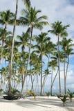Palmera en la playa Fotografía de archivo
