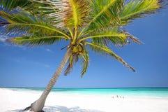 Palmera en la playa Foto de archivo libre de regalías