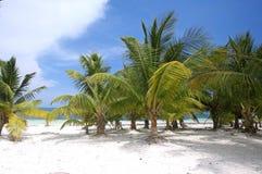 Palmera en la playa Fotos de archivo