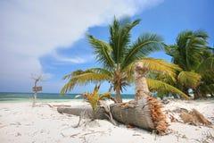 Palmera en la playa Imagen de archivo libre de regalías