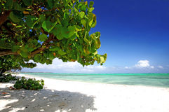Palmera en la playa Imagenes de archivo