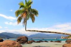 Palmera en la playa Aventueiro, Ilha grande, el Brasil Fotografía de archivo libre de regalías