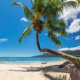 Palmera en la playa famosa de Beau Vallon en Seychelles, isla de Mahe imagen de archivo libre de regalías