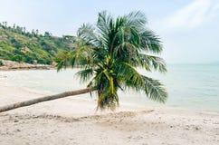 Palmera en la playa, fondo tropical hermoso del coco Imagen de archivo