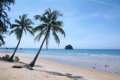 Palmera en la playa tropical fotos de archivo