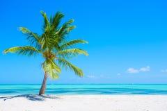 Palmera en la playa tropical Fotos de archivo libres de regalías
