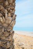 Palmera en la playa tropical Imagenes de archivo