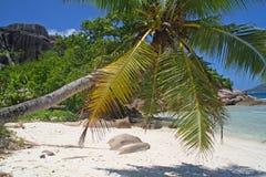 Palmera en la playa vacía Imagen de archivo