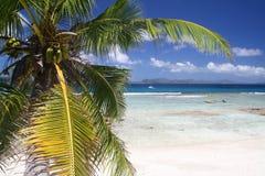 Palmera en la playa vacía Fotografía de archivo