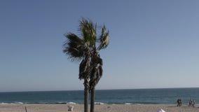 Palmera en la playa ventosa almacen de metraje de vídeo