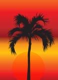 Palmera en la puesta del sol Imagen de archivo