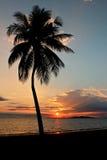 Palmera en la puesta del sol fotos de archivo libres de regalías