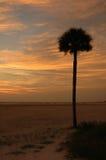 Palmera en la puesta del sol Fotografía de archivo