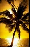 Palmera en la puesta del sol Foto de archivo libre de regalías