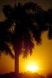 Palmera en la puesta del sol Foto de archivo